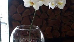 Single stem orchid in vase